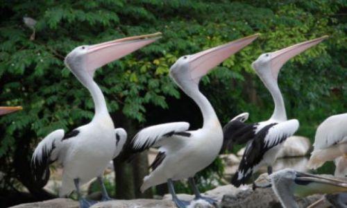 Zdjecie SINGAPUR / - / Singapur / park ptaków Jur