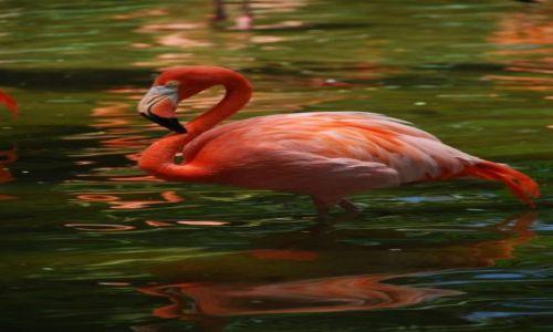 Zdjecie SINGAPUR / Singapur / Jurong Bird Park / Flaming