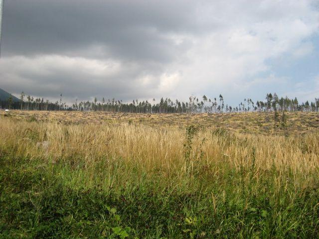 Zdjęcia: okolice Starego Smokowca, TATRY WYSOKIE [20] , SłOWACJA