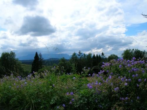 Zdjęcia: Słowacja, Słowacja, Kwiatki, SłOWACJA