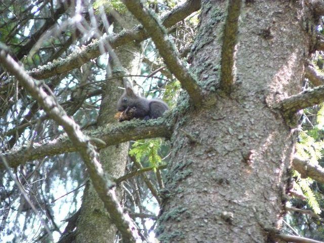 Zdjęcia: Tatry, wiewiórka, SłOWACJA