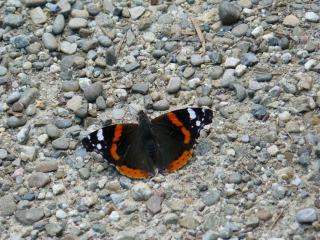 Zdjęcia: Tatry, motyl, SłOWACJA