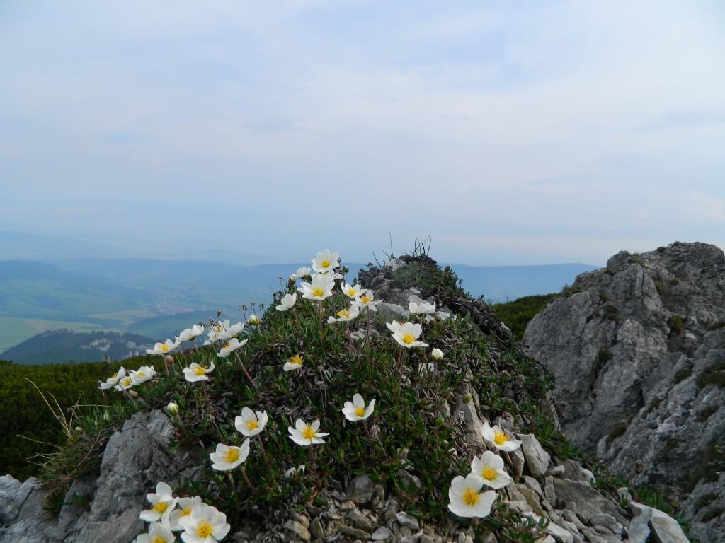 Zdjęcia: gdzieś na szlaku, tatry zachodnie, okolice Siwego Wierchu, SłOWACJA