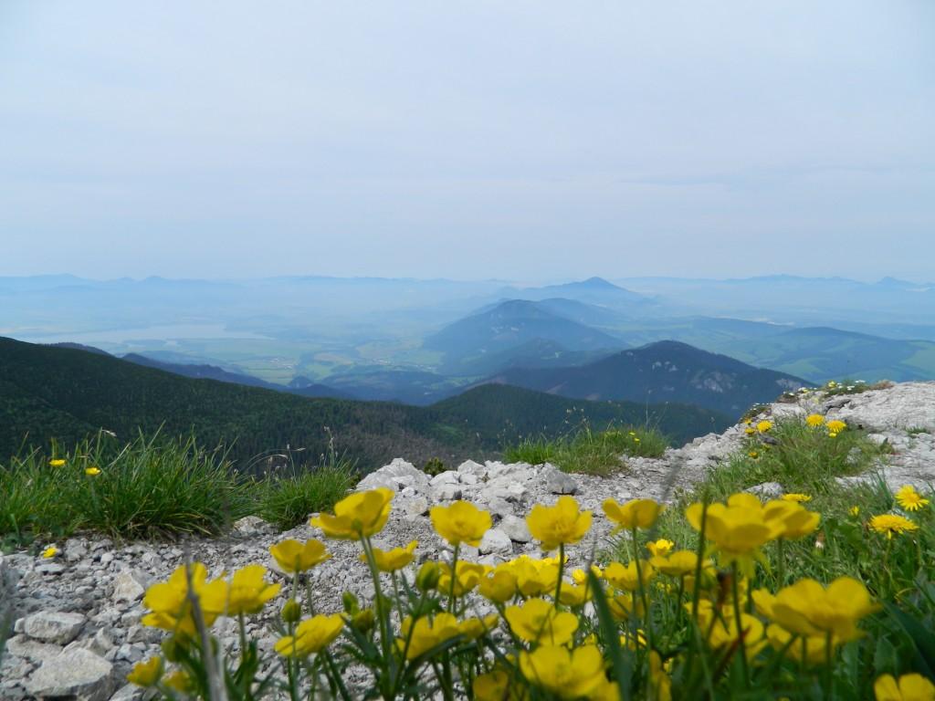 Zdjęcia: gdzieś na szlaku, tatry zachodnie, kwiaty na szlaku..., SłOWACJA
