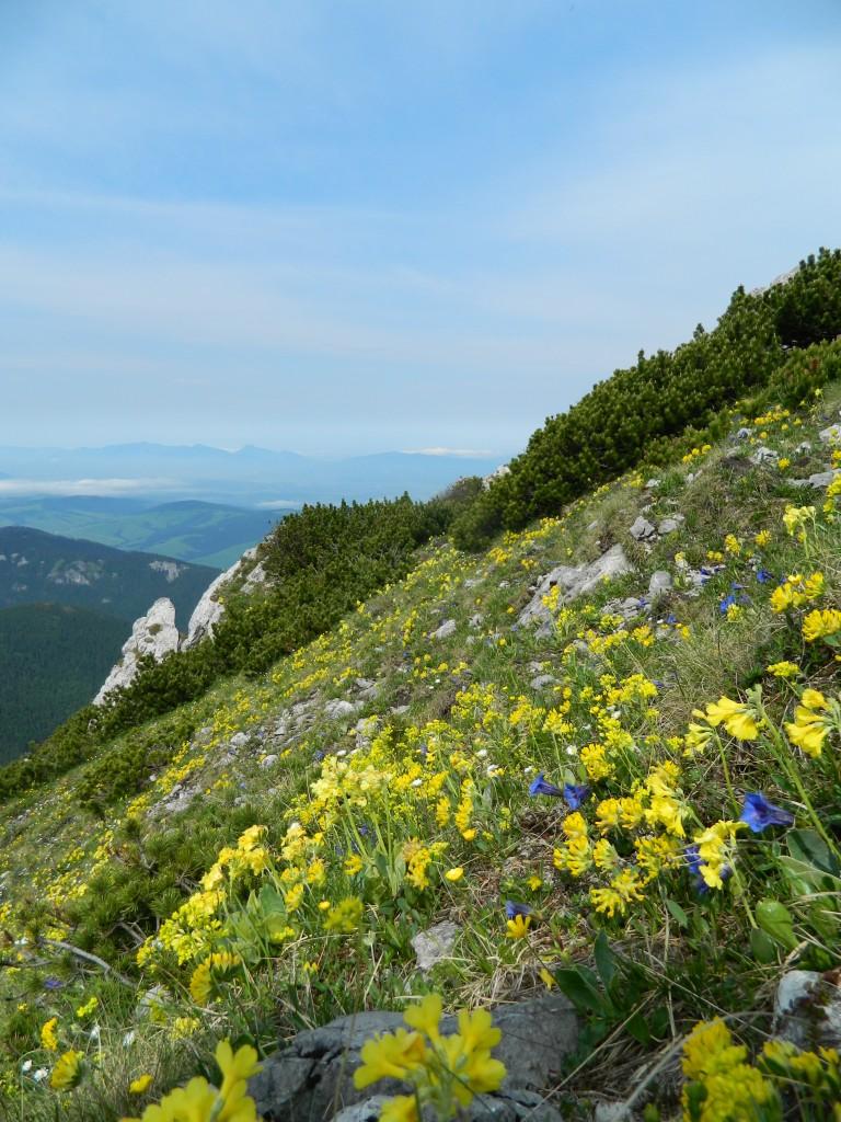 Zdjęcia: okolice siwego wierchu, tatry zachodnie, pięknie tam..., SłOWACJA