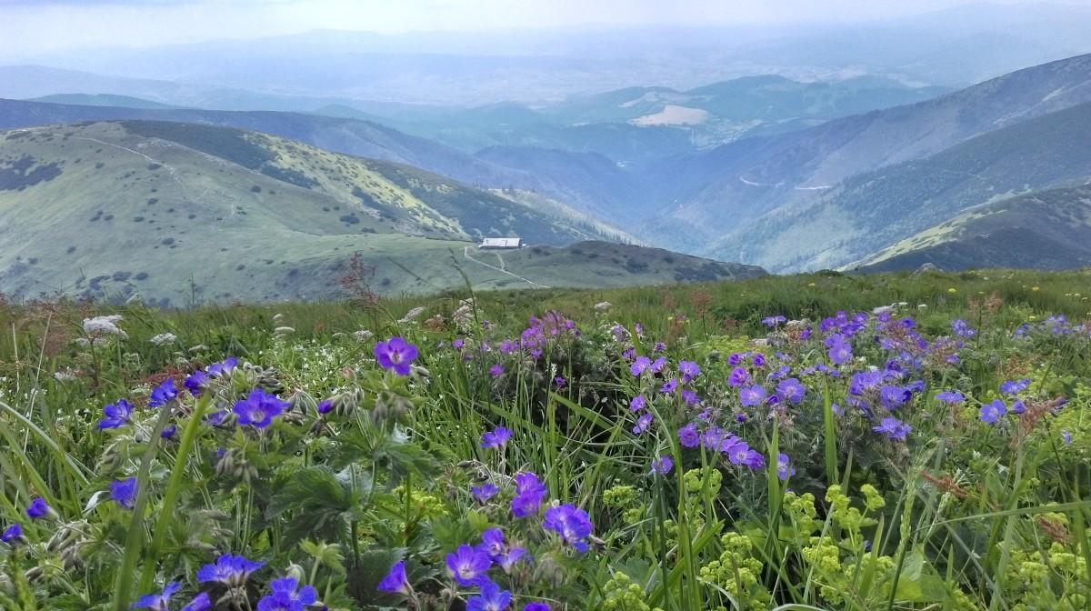 Zdjęcia: na szlaku..., tatry niskie, kolorowe niskie tatry..., SłOWACJA
