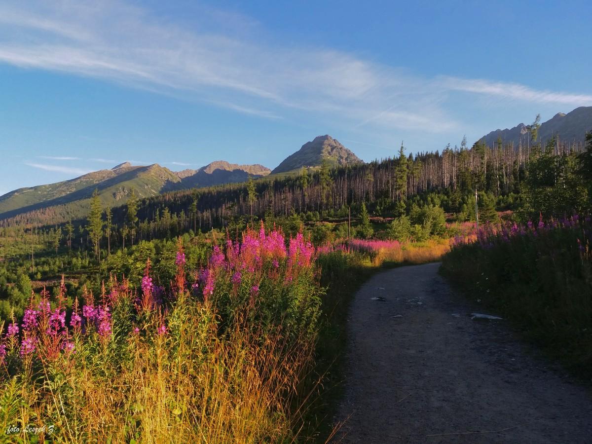 """Zdjęcia: Szlak Doliną Furkotną na Pośrednie Solisko., Dolina Furkotna., """"Iść, ciągle iść w stronę....szczytów"""", SłOWACJA"""
