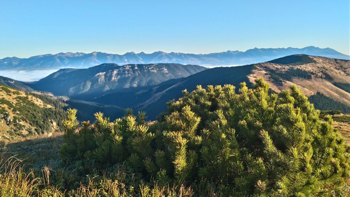 Zdjęcia: gdzieś na szlaku, Tatry Niskie, chwila w górach, SłOWACJA