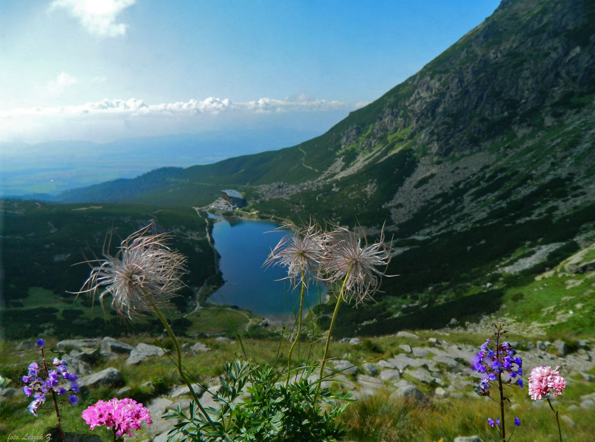 Zdjęcia: Dolina Wielicka., Wysokie Tatry., Roślinki na tle Wielickiego Stawu., SłOWACJA