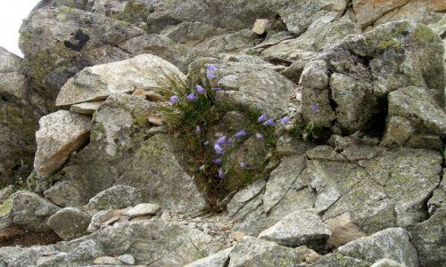 Zdjęcie SłOWACJA / -Tatry Zachodnie / Przełęcz Spalona / Bukiet w skalach