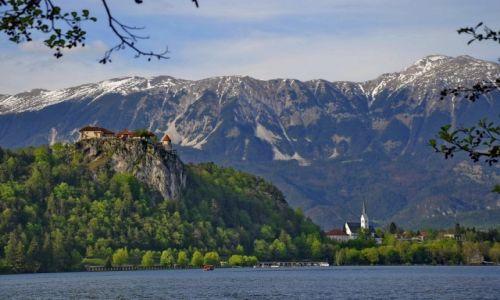Zdjęcie SłOWACJA / Carniola / Bled / Zamek na skale w Bled