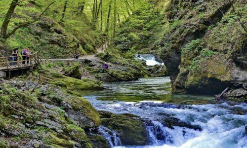 Zdjęcie SłOWACJA / Carniola / Bled / Rwąca rzeka Vintgar