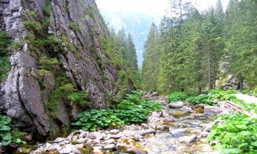 Zdjecie SłOWACJA / Wysokie Tatry / Javorova Dolina / Javorova Dolina