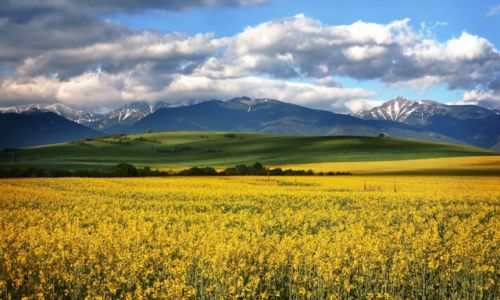 Zdjecie SłOWACJA / Tatry / okolice Liptowskiego Mikulasza / w kolorze wiosny
