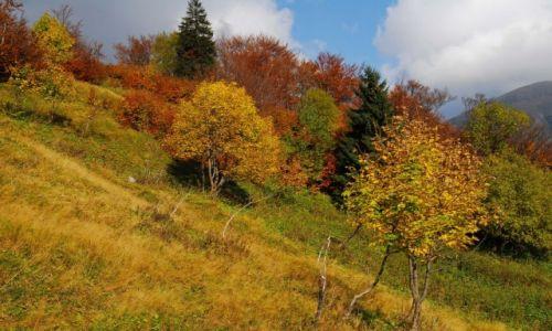 Zdjęcie SłOWACJA / Mała Fatra / szlak pod Chlebem / Jesień. Mówią, że smutna.