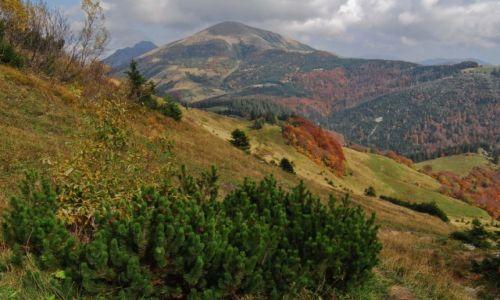 Zdjęcie SłOWACJA / Mała Fatra / szlak pod Chlebem / Czas złotych liści