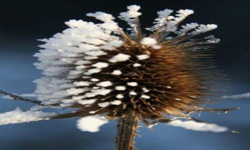 Zdjęcie SłOWACJA / Jasenska Dolina / Kasova / Na zakończenie zimy 2