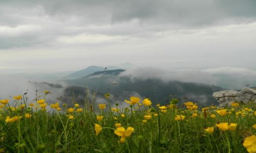 Zdjecie SłOWACJA / tatry zachodnie / okolice siwego wierchu / kwiaty w chmurach