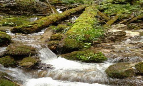 Zdjecie S�OWACJA / Ma�a  Fatra / Bia�y Potok / Zimna woda zdro