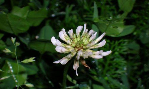 S�OWACJA / S�owacki Raj / S�owacki Raj / Kwiatek