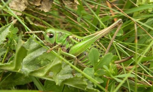 Zdjęcie SłOWACJA / Mała Fatra / Rozsutec / gram w zielone