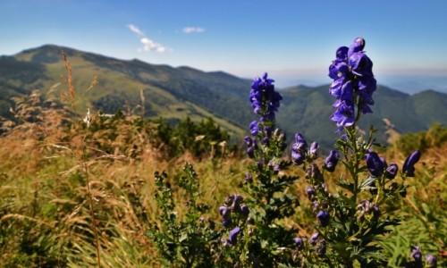 Zdjęcie SłOWACJA / Mała Fatra / Południowy Groń / Małofatrzańska flora I