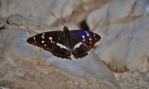 Zdjecie SłOWACJA / Mała Fatra / Południowy Groń / Małofatrzańska fauna II