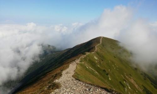 Zdjęcie SłOWACJA / Tatry zachodnie / Wołowiec / Spacer w chmurach