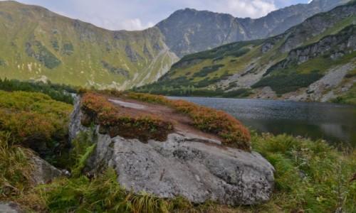Zdjecie SłOWACJA / Tatry Zachodnie / Dolina Rohacka / Rohackie pleso