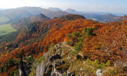 Zdjecie SłOWACJA / Północna Słowacja / Sulov / Każdemu życzę takiej jesieni.