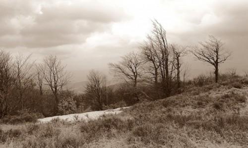 Zdjęcie SłOWACJA / Góry Czerchowskie (Cergov) / Mincol / Wiosna wspina się powoli
