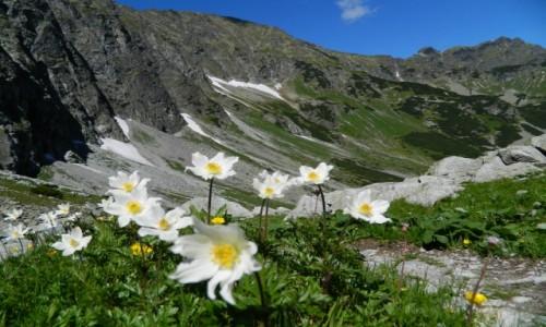 Zdjecie SłOWACJA /  od jaworowej doliny / gdzieś po drodze  / góry... kwiaty...i cudowne widoki...