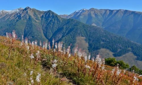 Zdjęcie SłOWACJA / Tatry Zachodnie / Szlak na Baraniec, widok na Othrance / Góry są po to, by żyć nimi w dolinach.