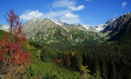 Zdjęcie SłOWACJA / Wysokie Tatry / W drodze nad Popradske Pleso / Jesień w Tatrach Słowackich