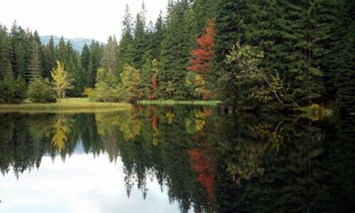 Zdjęcie SłOWACJA / Demianowska Dolina / Vrbické pleso / Barwy jesieni