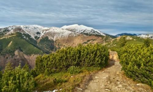 Zdjęcie SłOWACJA / tatry niskie / gdzieś na szlaku / smak kolorów w górach...