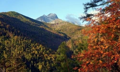 Zdjęcie SłOWACJA / Wysokie Tatry / Dolina do Siedmiu Źródeł  / Barwy jesieni