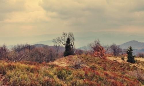 Zdjęcie SłOWACJA / Góry Czerchowskie / - / Za miedzą