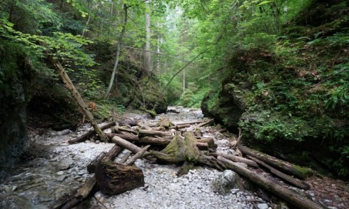Zdjecie SłOWACJA / Spisz / Słowacki Raj - Sucha Bela / Na zielonym szlaku