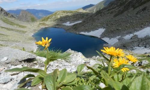 Zdjecie SłOWACJA / tatry / mała wysoka / litworowa dolina ze stawem