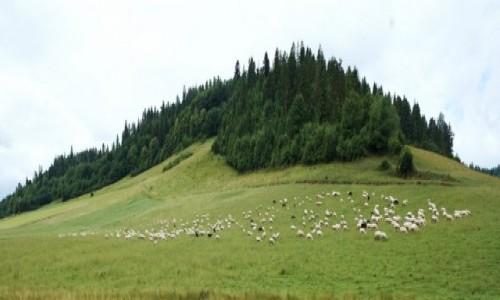 Zdjęcie SłOWACJA / Pieniny / Po drodze / Panorama z owieczkami