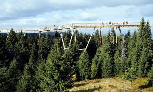 Zdjecie SłOWACJA / Tatry Bielskie / Bachledowa Dolina / Ścieżka w koronach drzew