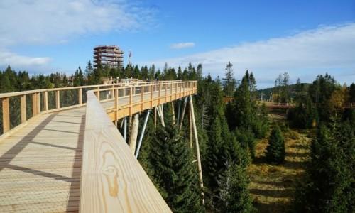 SłOWACJA / Tatry Bielskie / Bachledowa Dolina / Ponad drzewami