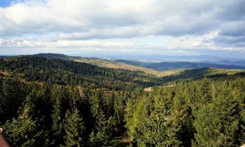 Zdjecie SłOWACJA / Bachledowa Dolina / Ścieżka w koronach drzew / Hen