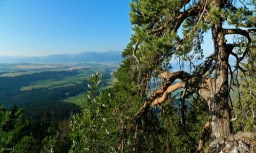 Zdjecie SłOWACJA / Babky 1566 m. / Bobrowiec. / Ze szlaku w Tatrach Zachodnich.