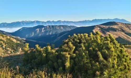 Zdjecie SłOWACJA / Tatry Niskie / gdzieś na szlaku / chwila w górach