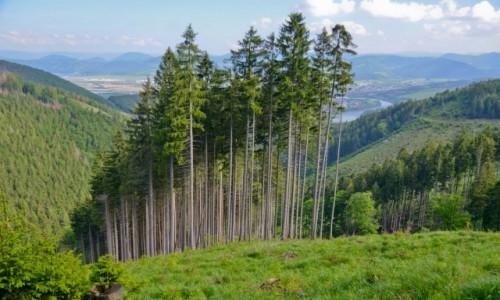 Zdjecie SłOWACJA / Martinske Hole / szlak na Mincol / Magia zaklęta w górach