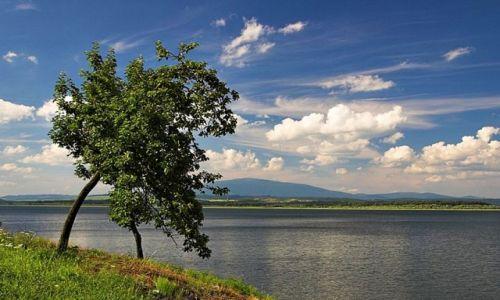 Zdjęcie SłOWACJA / Orawa / Jezioro orawskie / Jabłoń.......