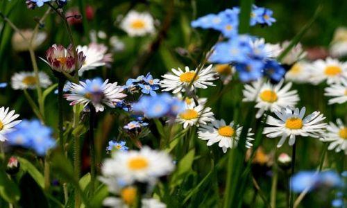 Zdjecie SłOWACJA / Mała Fatra / ok. Terchowej / KONKURS - wiosenne kwiaty ....