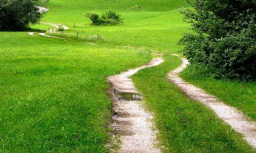 Zdjecie SłOWACJA / Mała Fatra / ok. Terchowej / KONKURS - idzie wiosna....na zielonej łące